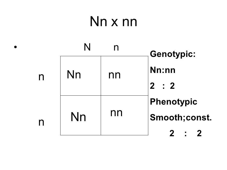 Nn x nn Nn Nn nn n nn n N n Genotypic: Nn:nn 2 : 2 Phenotypic