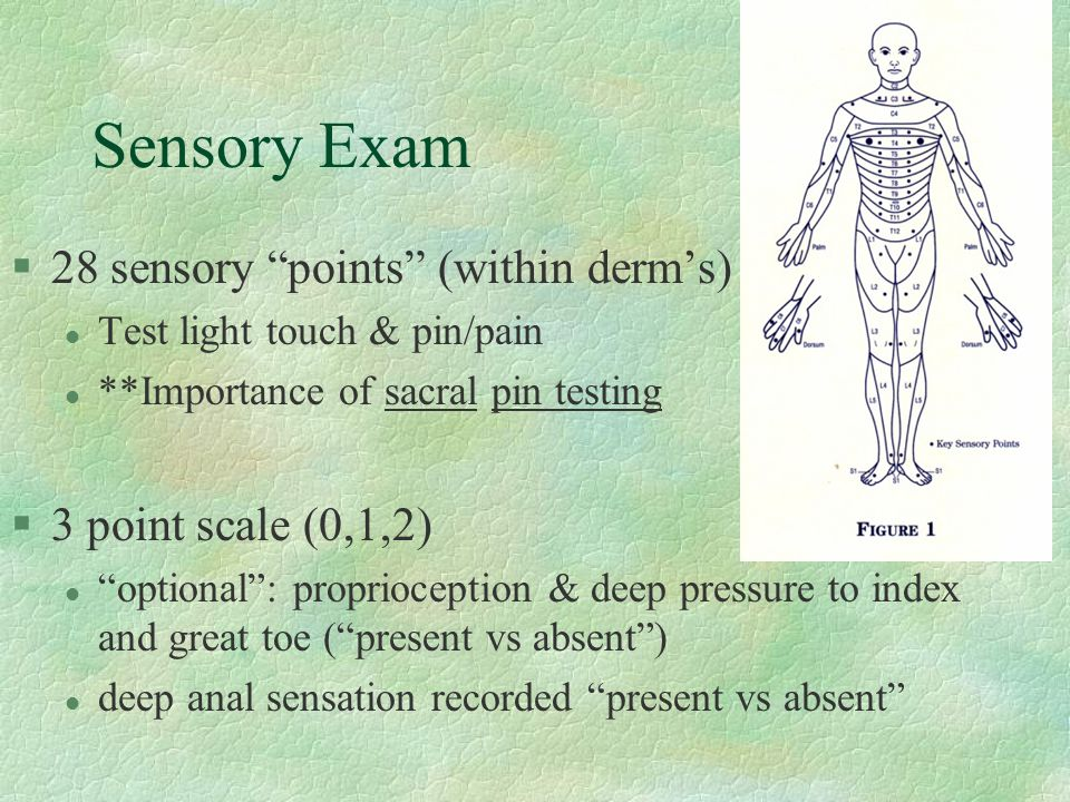 Sensory Exam 28 sensory points (within derm's) 3 point scale (0,1,2)