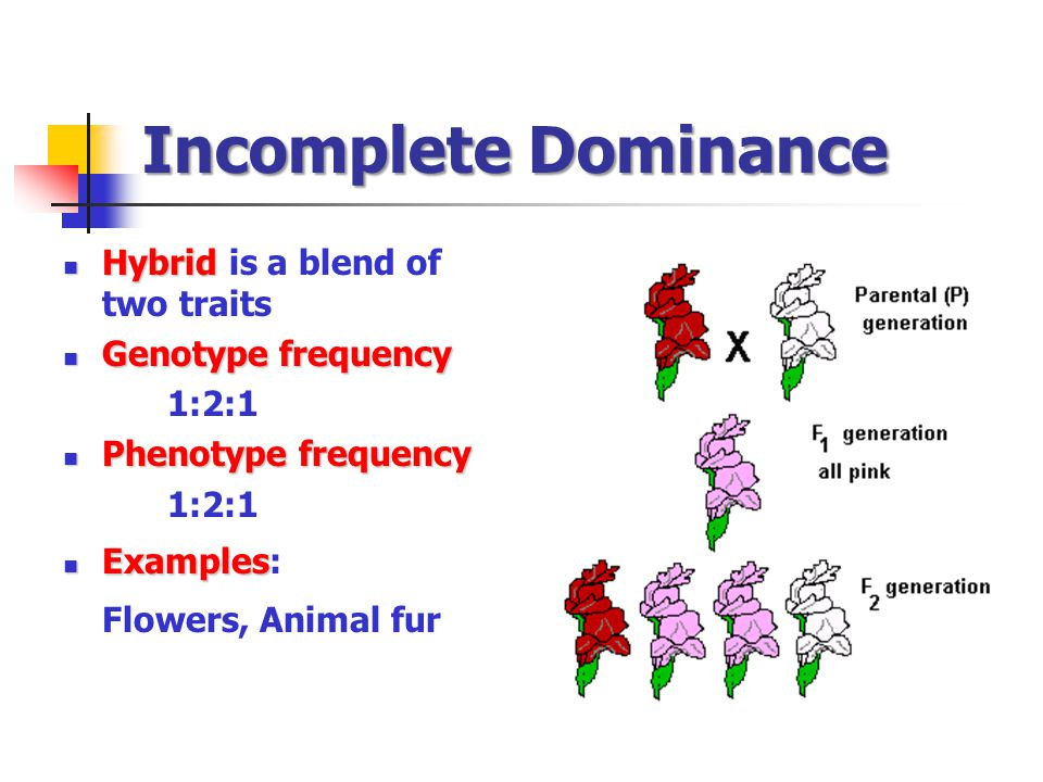 Incomplete Dominance Flowers, Animal fur