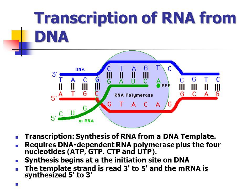Transcription of RNA from DNA
