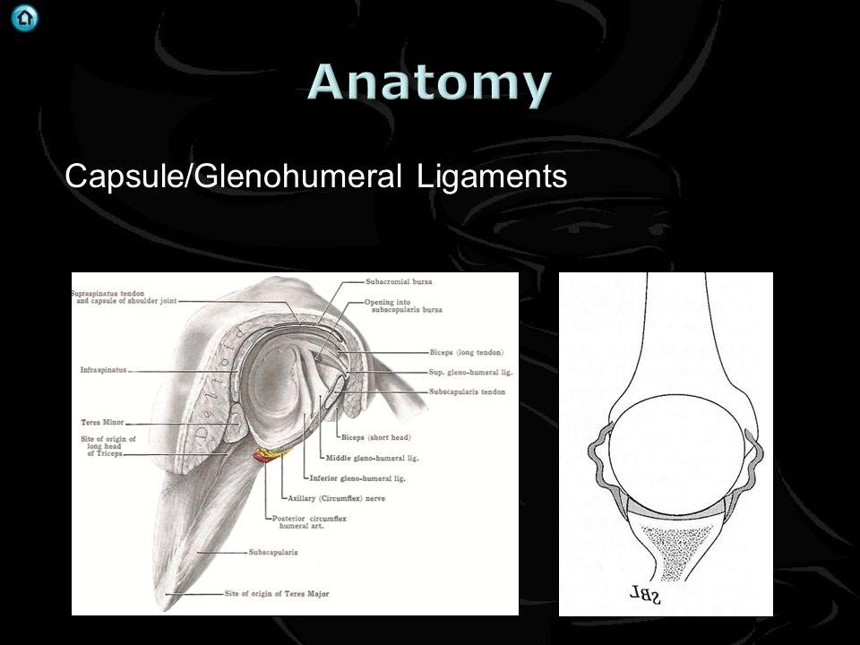 Anatomy Capsule/Glenohumeral Ligaments