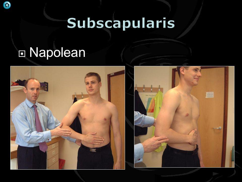 Subscapularis Napolean