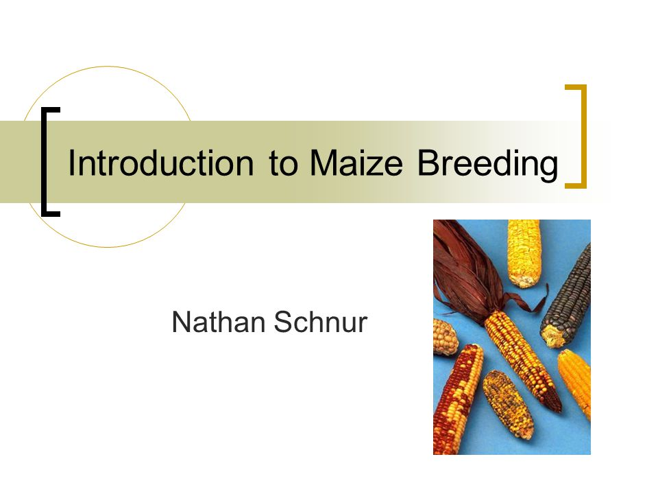 Introduction to Maize Breeding