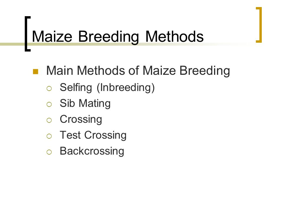 Maize Breeding Methods