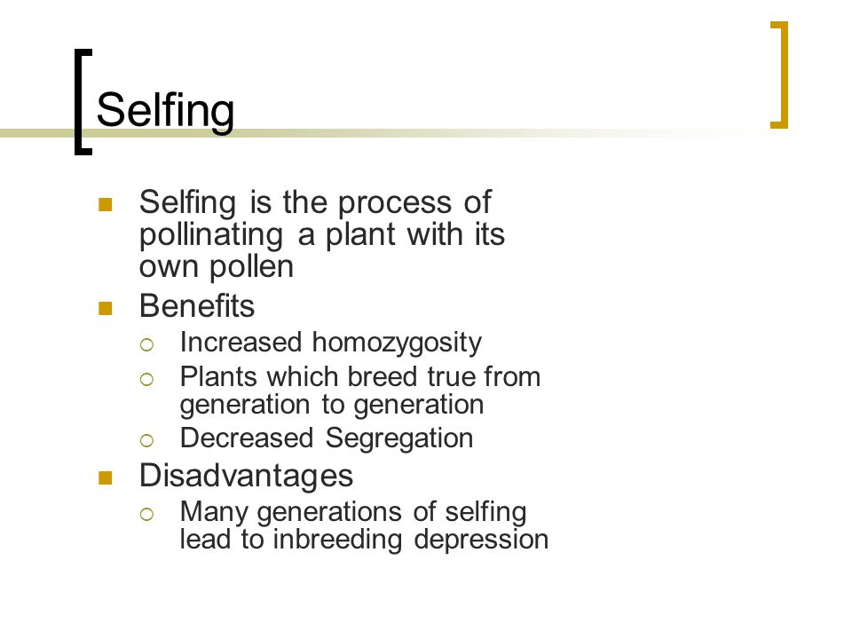 Selfing Selfing is the process of pollinating a plant with its own pollen. Benefits. Increased homozygosity.