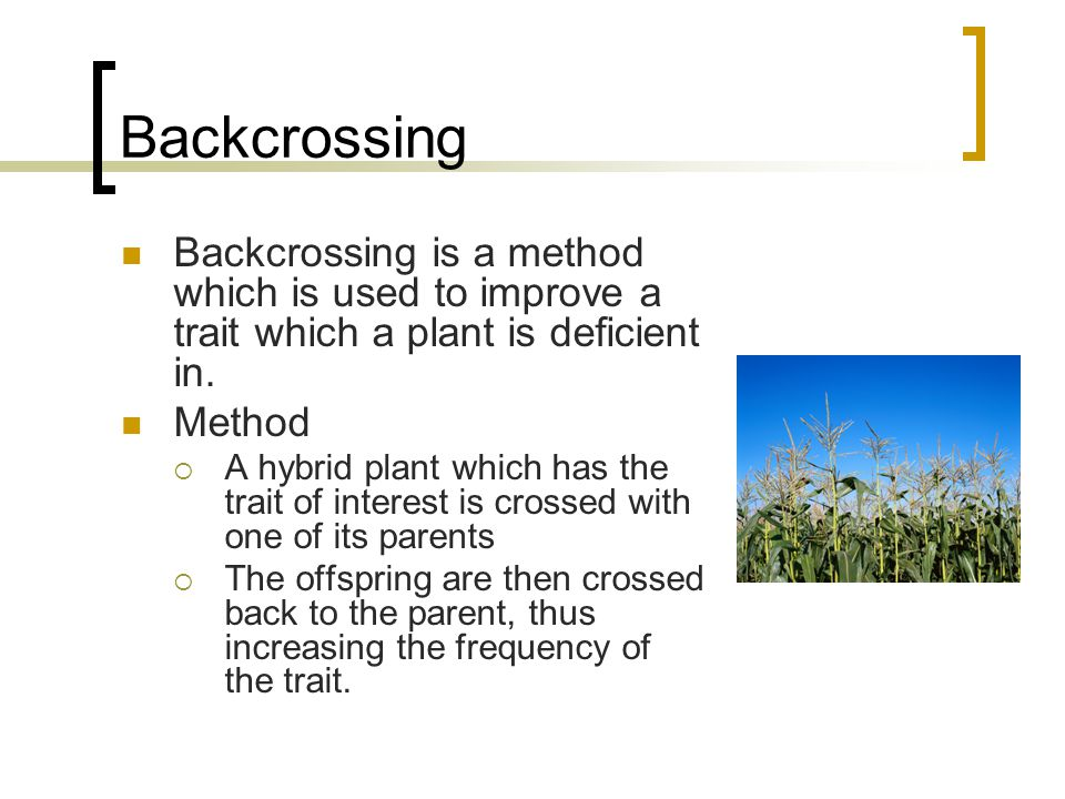 Backcrossing Backcrossing is a method which is used to improve a trait which a plant is deficient in.