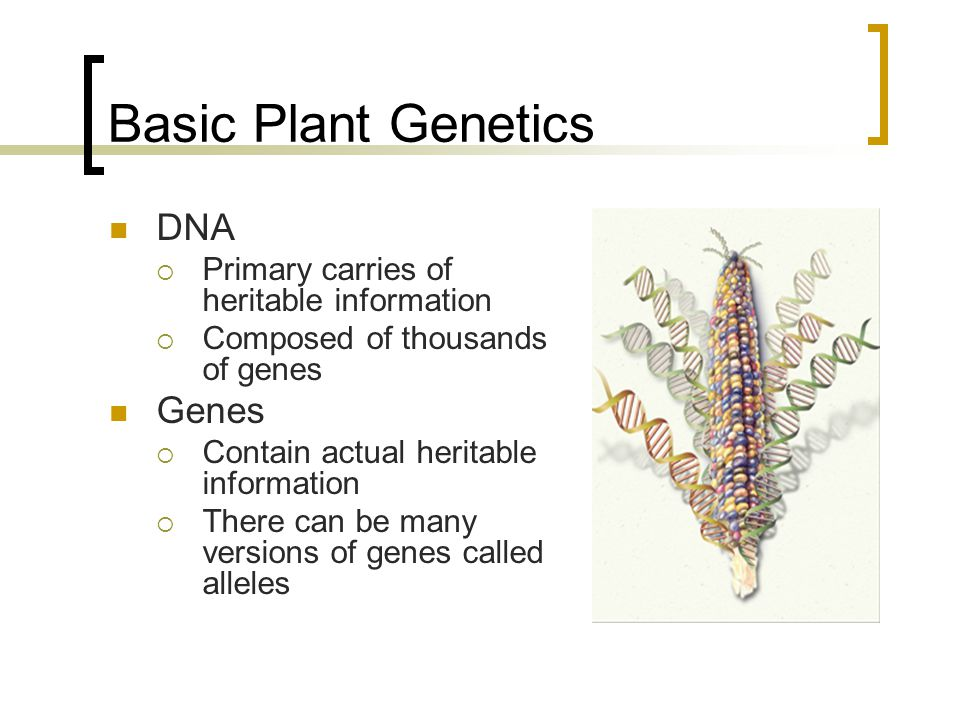 Basic Plant Genetics DNA Genes