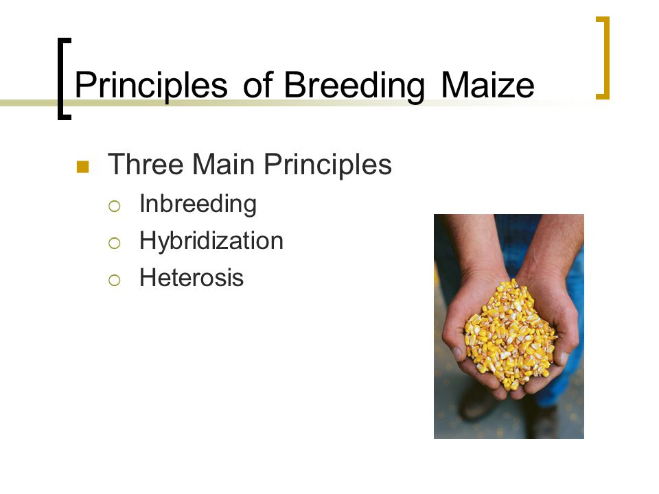 Principles of Breeding Maize