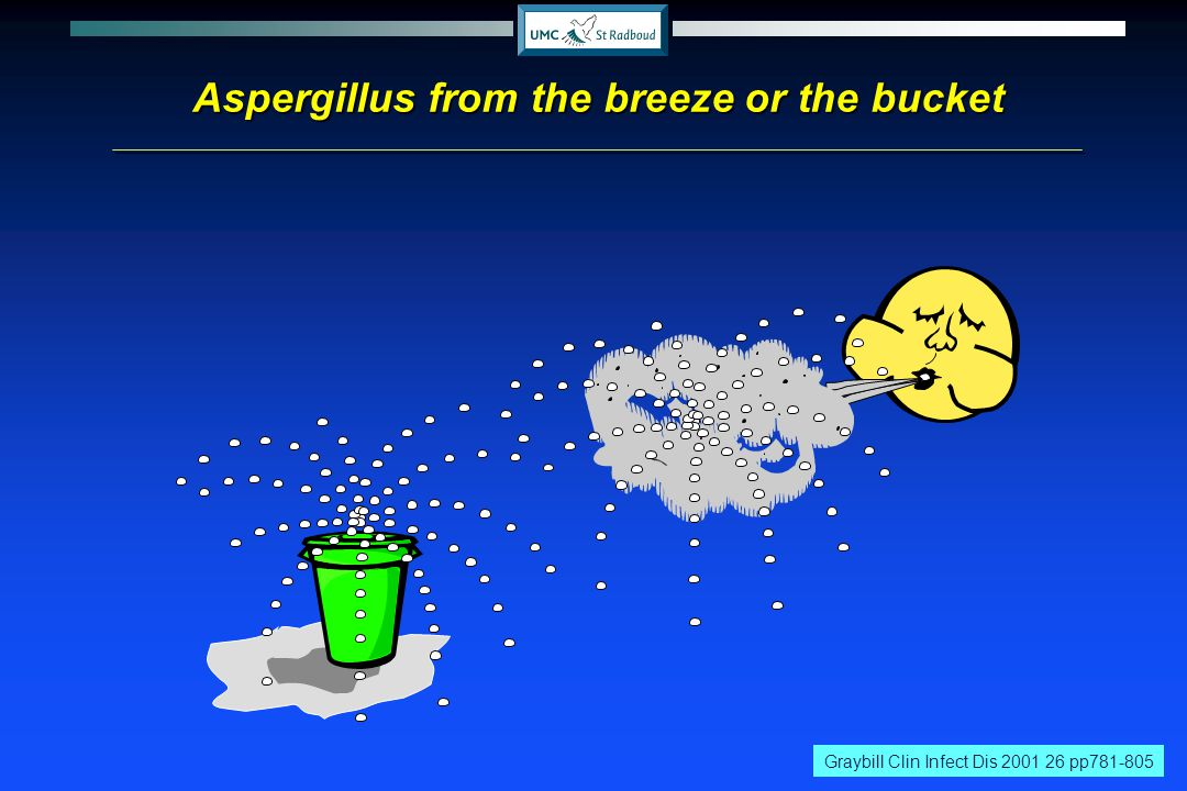 Aspergillus from the breeze or the bucket