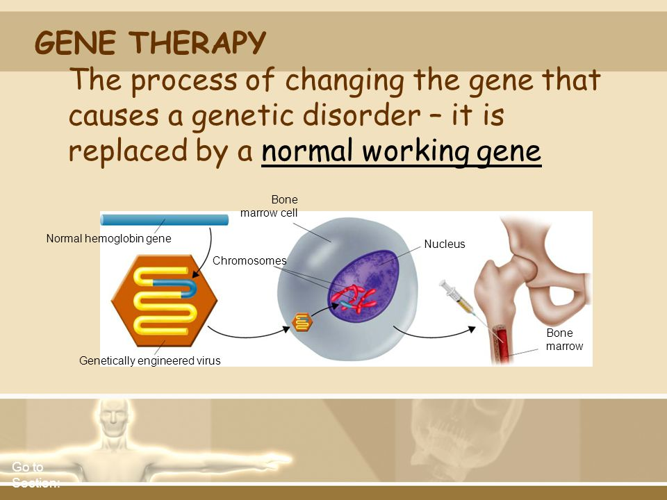 GENE THERAPY The process of changing the gene that causes a genetic disorder – it is replaced by a normal working gene.