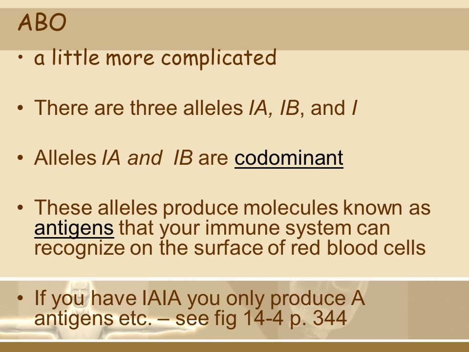 ABO a little more complicated There are three alleles IA, IB, and I