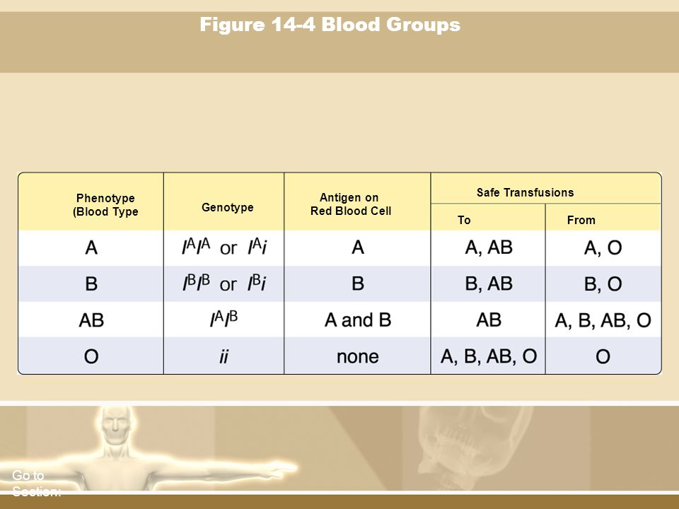 Figure 14-4 Blood Groups Go to Section: Safe Transfusions Phenotype