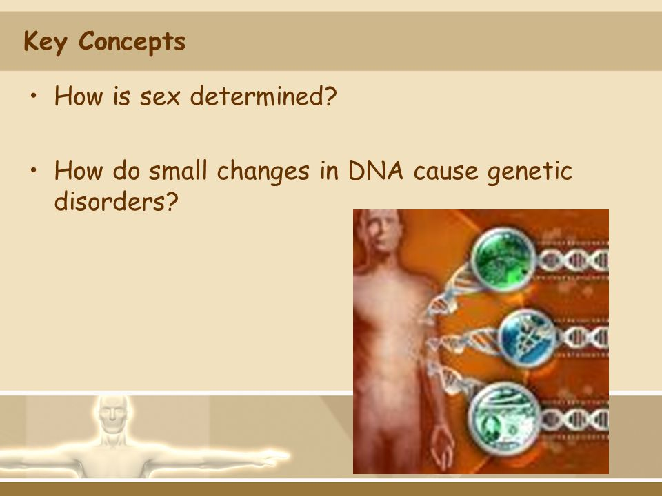 Key Concepts How is sex determined How do small changes in DNA cause genetic disorders