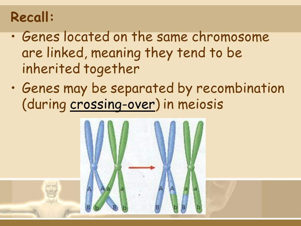 Recall: Genes located on the same chromosome are linked, meaning they tend to be inherited together.