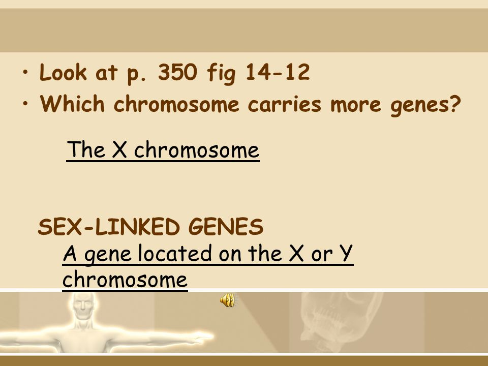 Look at p. 350 fig 14-12 Which chromosome carries more genes The X chromosome. SEX-LINKED GENES.