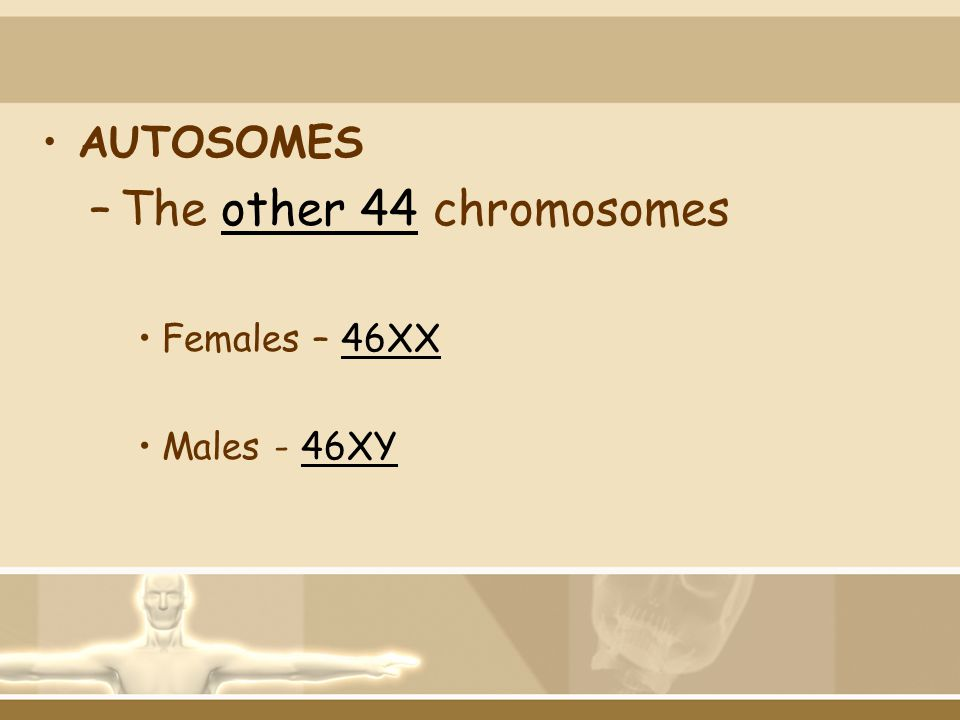 AUTOSOMES The other 44 chromosomes Females – 46XX Males - 46XY