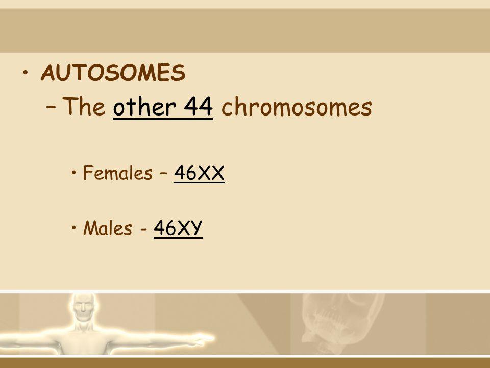 AUTOSOMES The other 44 chromosomes Females – 46XX Males - 46XY