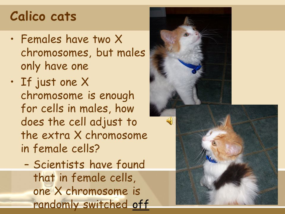 Calico cats Females have two X chromosomes, but males only have one