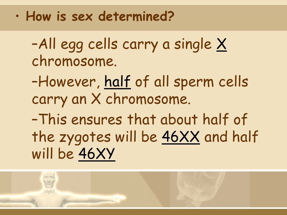 All egg cells carry a single X chromosome.