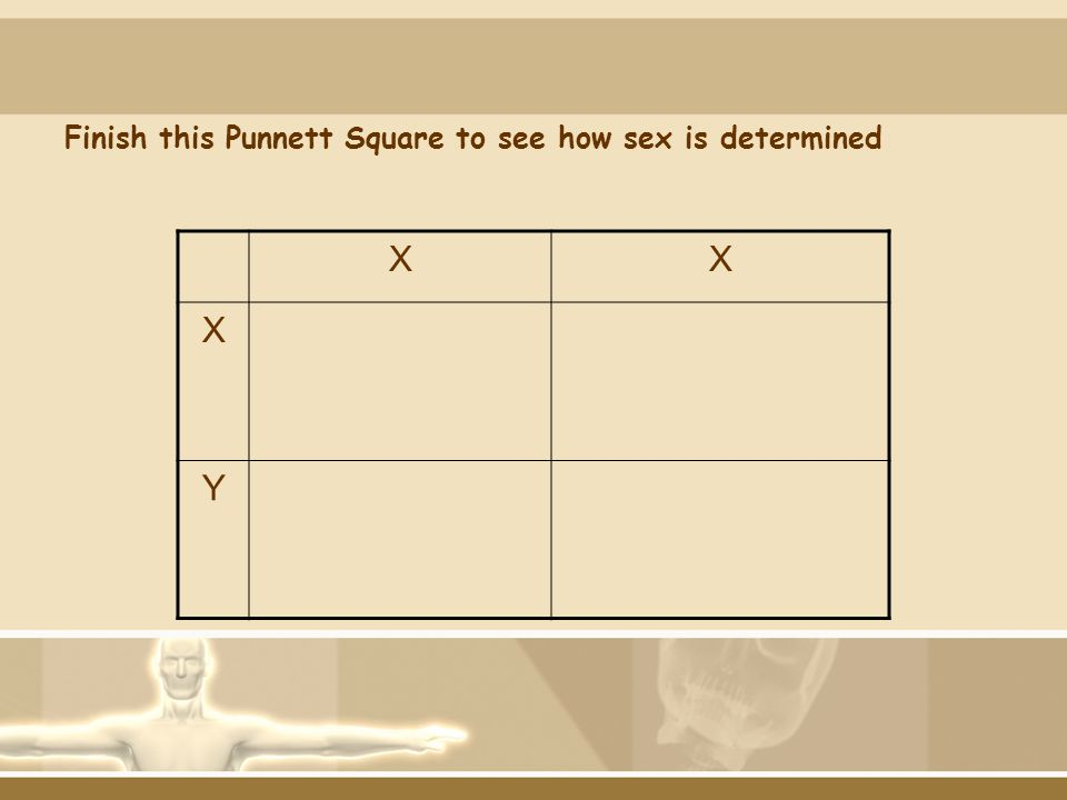 Finish this Punnett Square to see how sex is determined