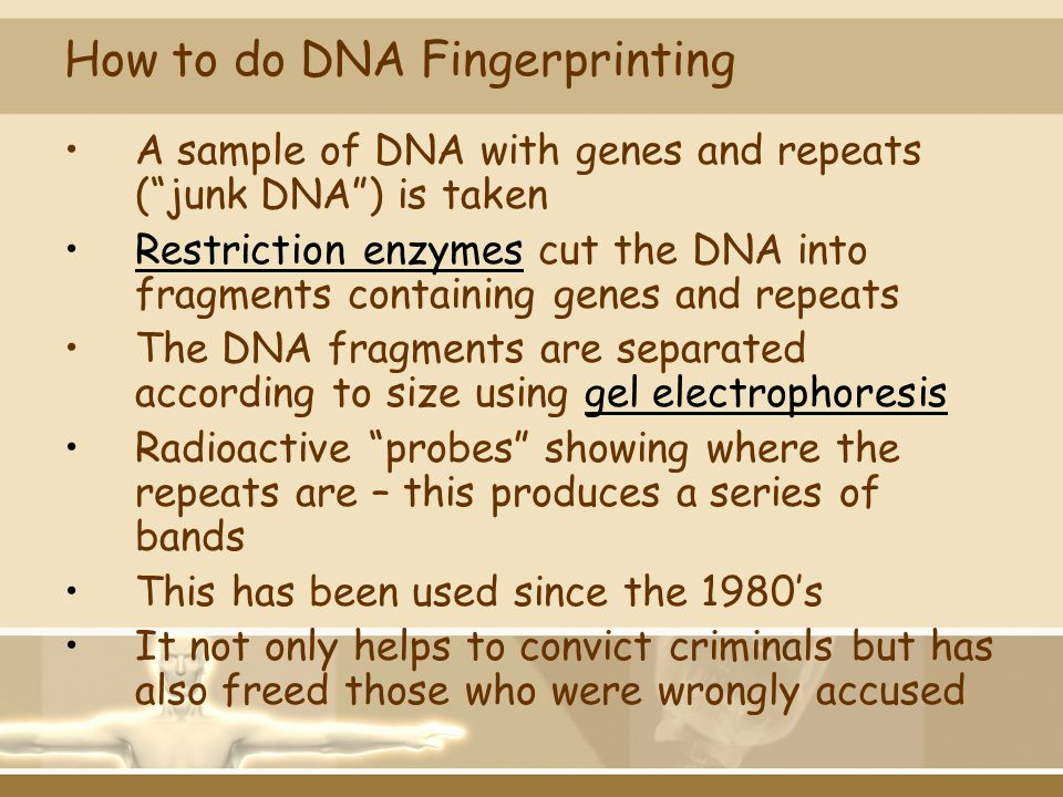 How to do DNA Fingerprinting
