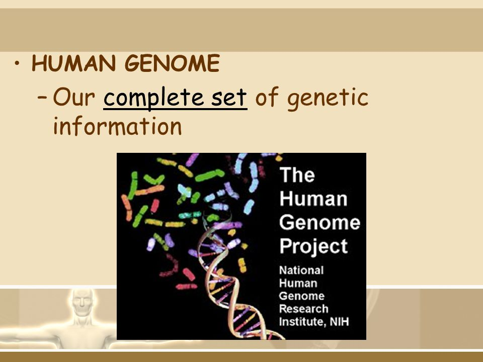 Our complete set of genetic information