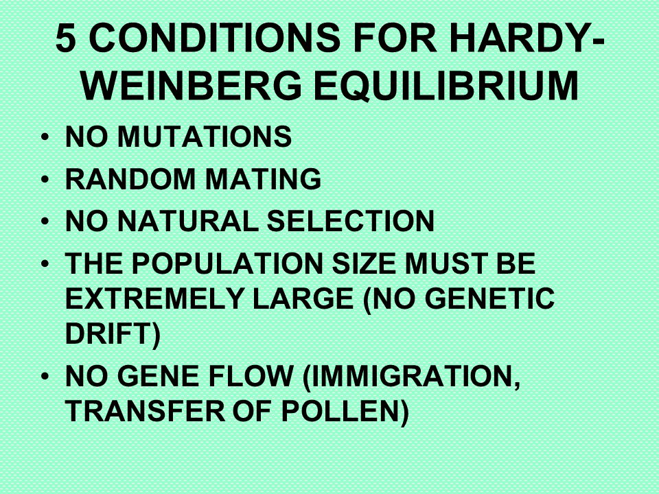 5 CONDITIONS FOR HARDY-WEINBERG EQUILIBRIUM