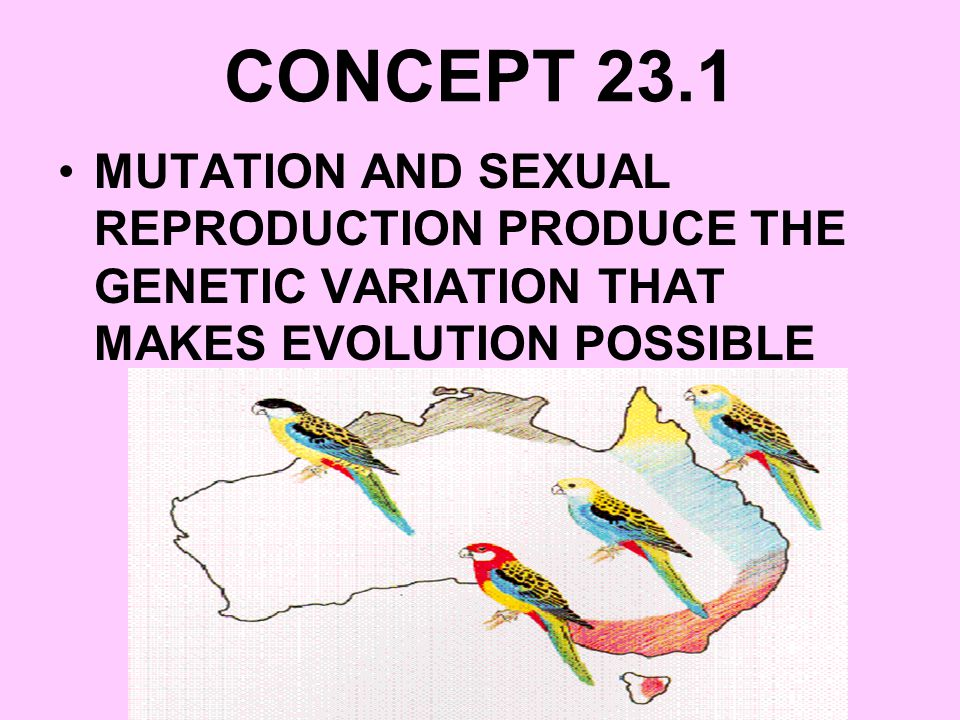 CONCEPT 23.1 MUTATION AND SEXUAL REPRODUCTION PRODUCE THE GENETIC VARIATION THAT MAKES EVOLUTION POSSIBLE.