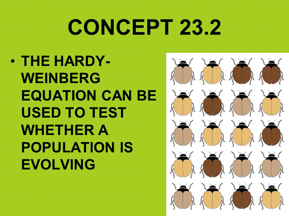 CONCEPT 23.2 THE HARDY-WEINBERG EQUATION CAN BE USED TO TEST WHETHER A POPULATION IS EVOLVING