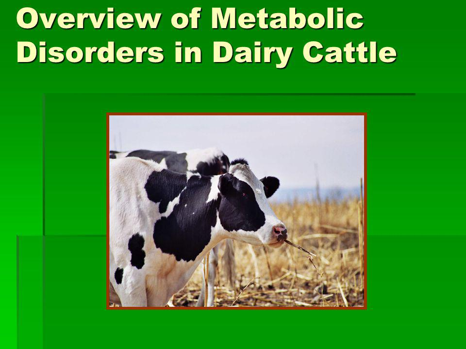 Overview of Metabolic Disorders in Dairy Cattle