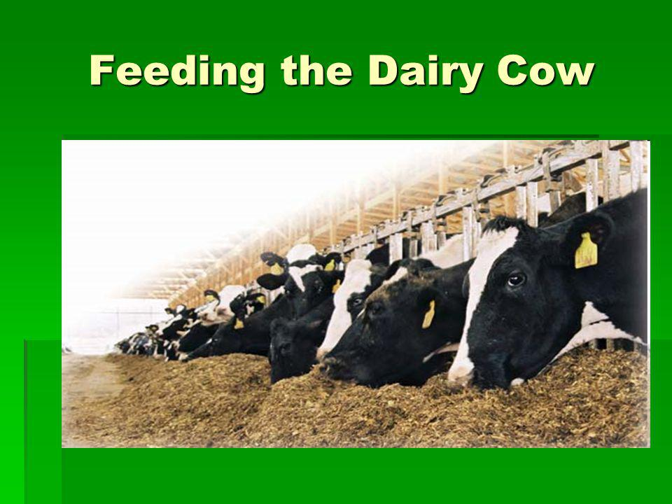 Feeding the Dairy Cow
