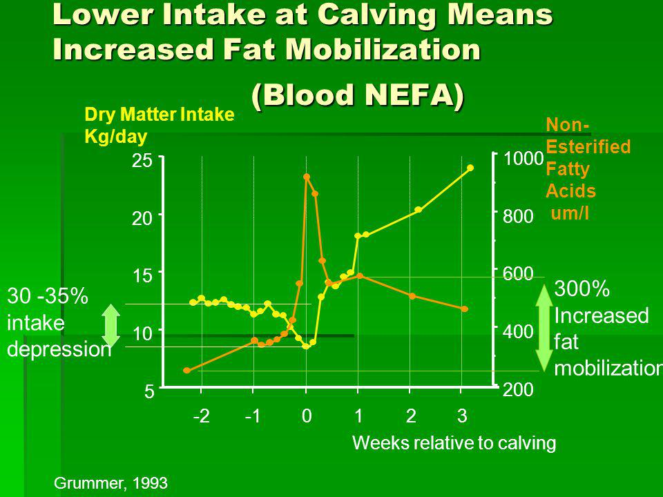 Lower Intake at Calving Means Increased Fat Mobilization (Blood NEFA)