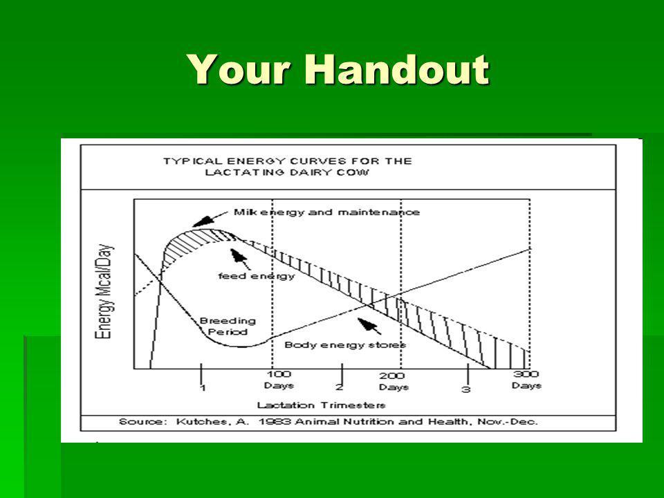 Your Handout