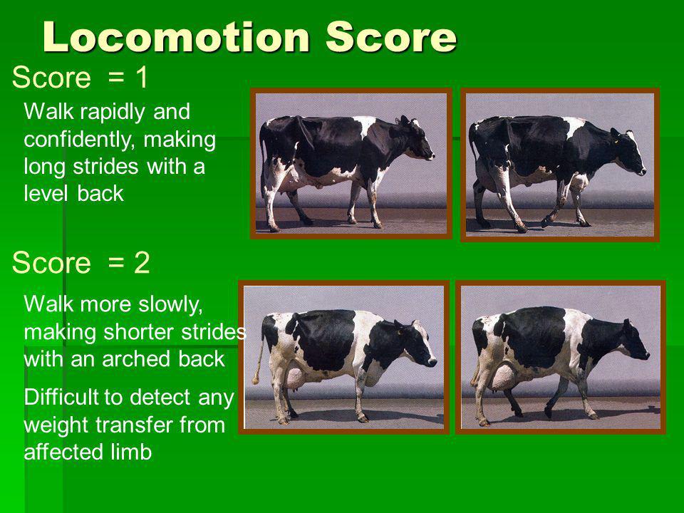 Locomotion Score Score = 1 Score = 2
