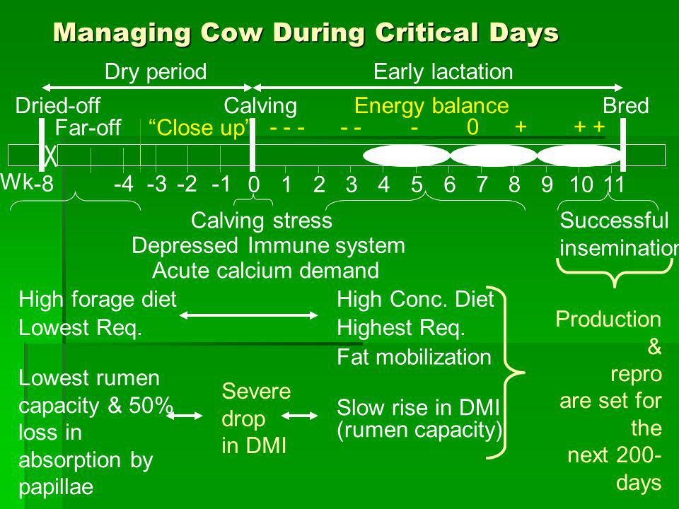 Managing Cow During Critical Days