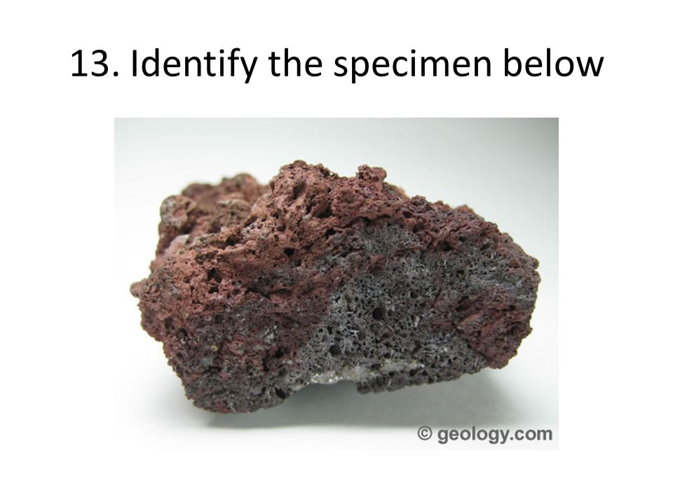 13. Identify the specimen below