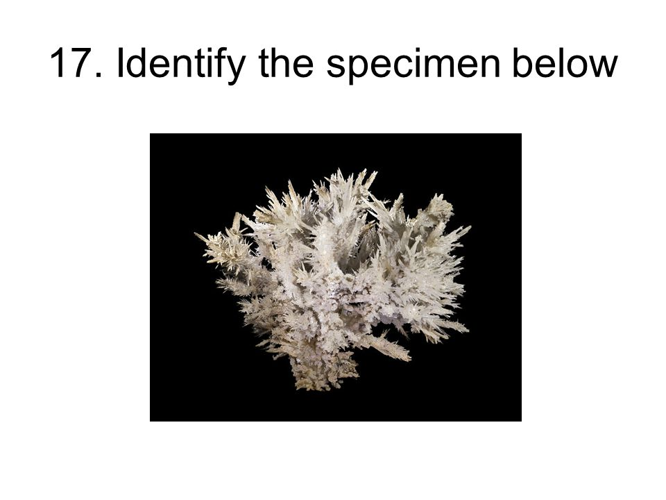 17. Identify the specimen below