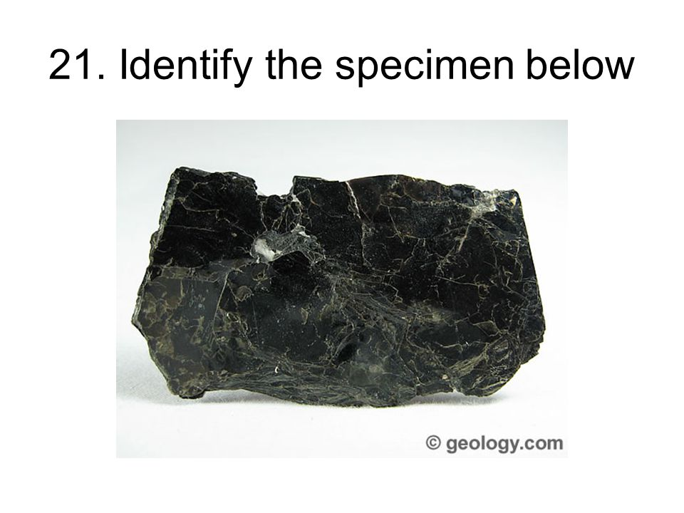 21. Identify the specimen below