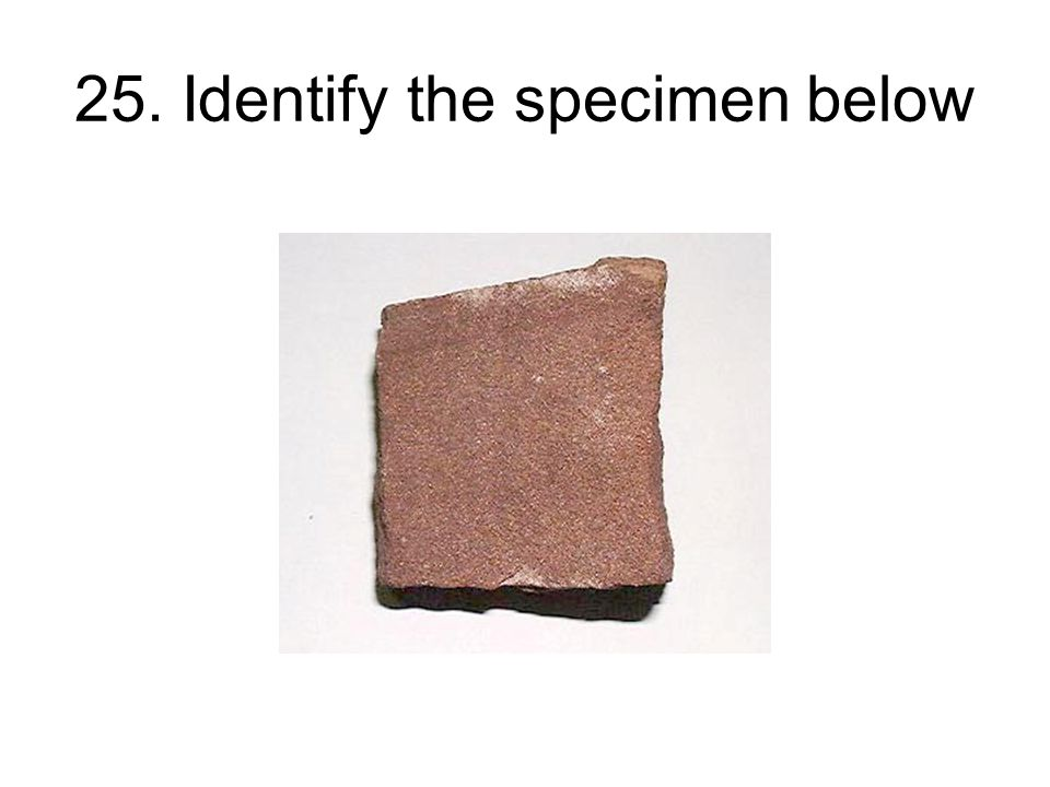 25. Identify the specimen below