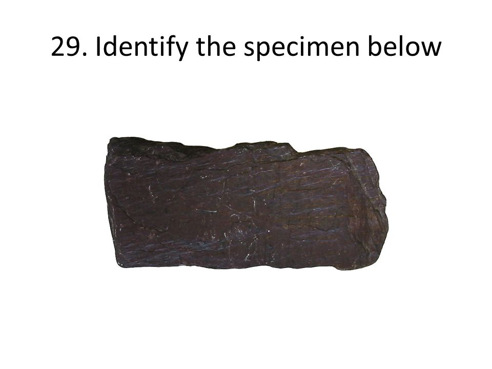 29. Identify the specimen below
