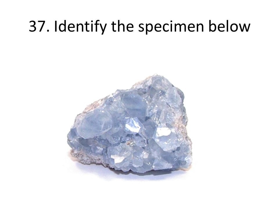 37. Identify the specimen below