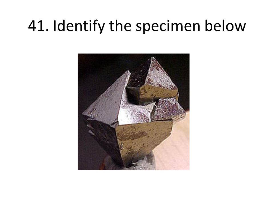 41. Identify the specimen below