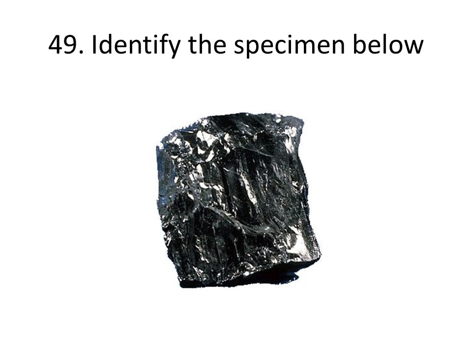 49. Identify the specimen below