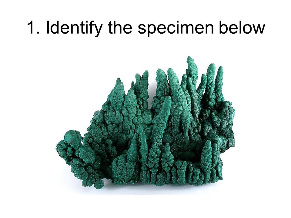 1. Identify the specimen below