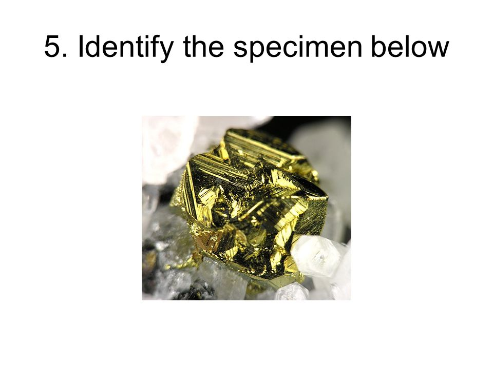 5. Identify the specimen below