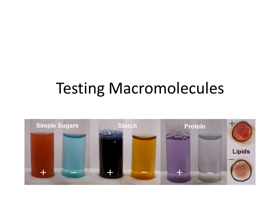 test for the presence of macromolecules Now you are ready to test for the presence of macromolecules in various household substances on the side of the room you will find beakers containing a variety of different substances including: corn.