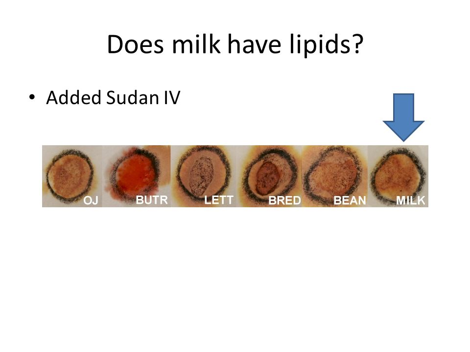 Does milk have lipids Added Sudan IV