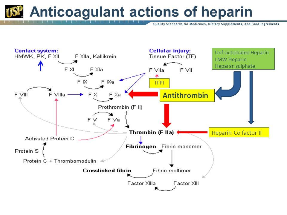 Anticoagulant actions of heparin