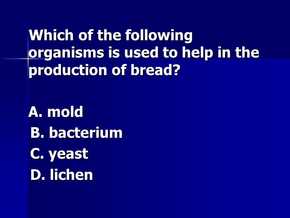 A. mold B. bacterium C. yeast D. lichen