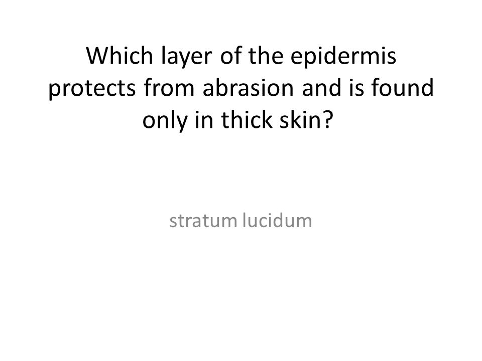 Which layer of the epidermis protects from abrasion and is found only in thick skin